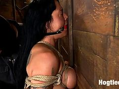 Sexy Hawaiian chick has her huge tits bound, whippedcums hard while impaled, squirting buckets! : Mahina Zaltana is back. This smooth skinned, tan Hawaiian is beautifully erotic and sensual, with a love for tight bondage and discipline.Bound in a traditional Japanese box tie, Mahina is manhandled and abused. Her ass is abused, her big tits bound tightly. She is impaled on a big dildo and tightly gagged. Her body is flogged, and Mahina must endure the pain to get to the pleasure. When we finally let Mahina cum, she cums in screaming buckets of squirt and juices. Brutal orgasms are ripped from her helpless body. There is nothing she can do but cum, and we make her orgasm over and over.