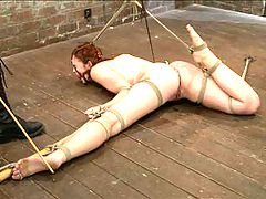 Jodi Taylor Eager slut elaborately bound, caned, zapped and fucked! : Jodi Taylor may be young and fairly new to the industry- but she is a kinky slut who is ready to play. In the first scene Clair presents her natural sexy body in a standing position pulled taught with a neck rope. This whore loves to cum and will withstand all sorts of sadistic games to win her orgasms.Next is a spread open floor position with her pussy and ass perfectly exposed for all of Clairs devious ideas which include cruel electricity play, ass hooks, and pussy pounding orgasms.This slut says she loves suspension, so the last pose tests her commitment......
