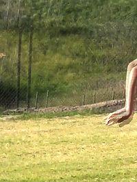 Public Flasher Surprise Yoga Chick