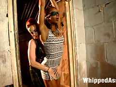 Lesbian Fuck Toy Marie Luv : Marie Luv makes her debut on Whipped Ass! Bella Rossi puts this hardbody whos built for sex through her paces and Marie is a pleasure to watch suffer. Shes dominated and fucked in an intense lesbian BDSM session with single tail whipping, spanking, pussy licking and strap on anal sex!
